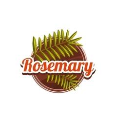 Rosemary spice vector