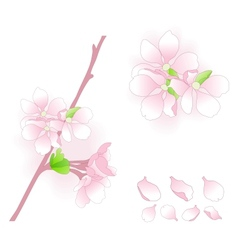 Apple blossom elements vector image