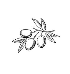 Hand drawn sketch of ripe olives vector image