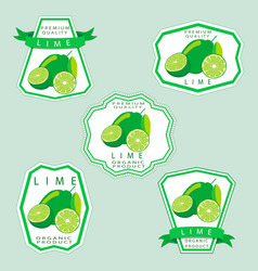 the theme lime vector image