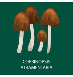 Group of common ink caps poisonous mushroom in a vector