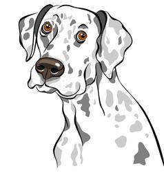 dog dalmatian breed vector image vector image
