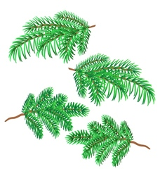 Sprigs of spruce christmas decorations vector