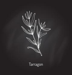 Tarragon aromatic kitchen herb vector