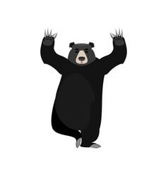 baribal yogi american black bear yoga wild animal vector image
