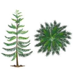 A Norfolk island plant vector image