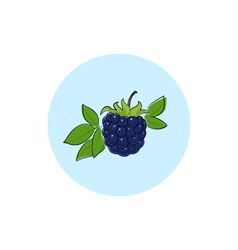 Icon Colorful Blackberry vector image