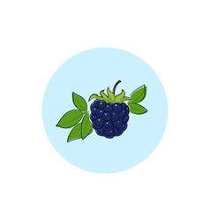 Icon colorful blackberry vector