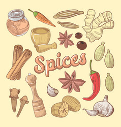 Spices hand drawn doodle with chili pepper vector