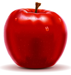 Red apple isolated on white vector