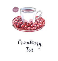 Cranberry tea in a white cup vector