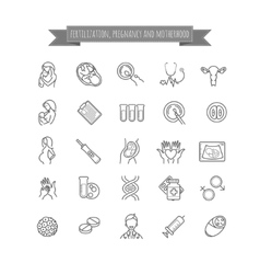 Fertilization pregnancy and motherhood icons vector