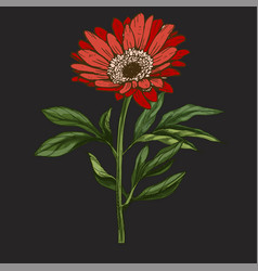 Hand drawn red daisy flower with stem and leaves vector