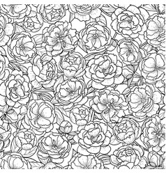peonies seamless pattern vector image vector image