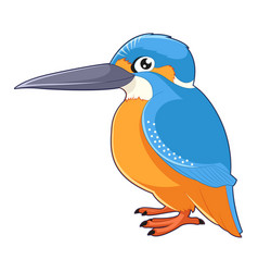 Cartoon smiling kingfisher vector