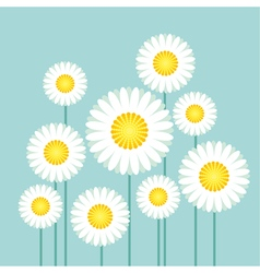 daisy on blue sky background vector image vector image