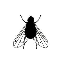 Fly Close-up with Transparent Wings vector image