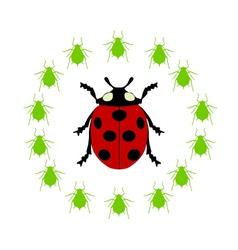 Ladybird diet vector image