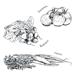 Hand drawn vegetables ink sketches set vector