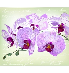 Beautiful orchid flowers vector