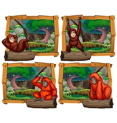 Four scenes of monkey in the jungle vector