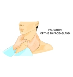 Palpation of the thyroid gland vector