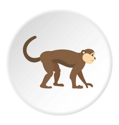 Macaque monkey icon circle vector
