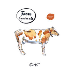 dairy cow vector image
