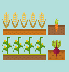 Farm harvesting field agriculture vector