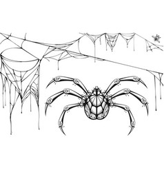 scary black and white spider and torn web vector image