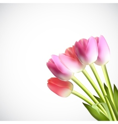 Beautiful pink realistic tulip vector