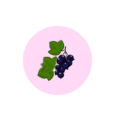 Icon colorful blackcurrant vector