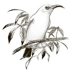 Bird  engraving vector