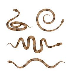 Collection of brown poisonous snakes or pythons vector