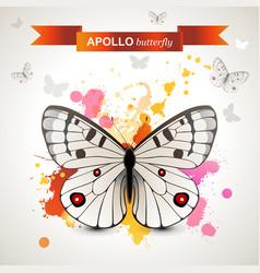 apollo butterfly vector image vector image
