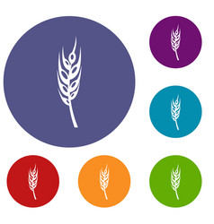 Barley spike icons set vector