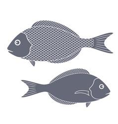 Dorado fish vector