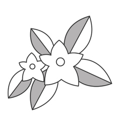 jasmine flowers icon vector image
