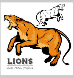 Lioness isolated animal vector