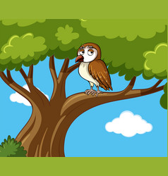 Owl stands on branch at daytime vector