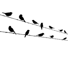 Birds on barb wire - freedom concept vector