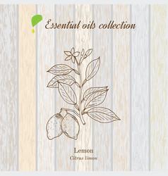 Pure essential oil collection lemon vector