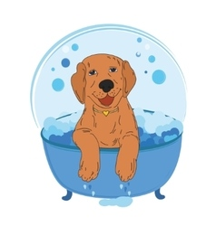 Dog bath color vector