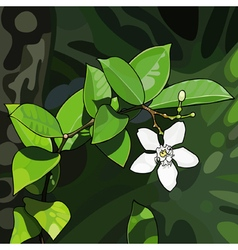 White flower of a tropical plant vector