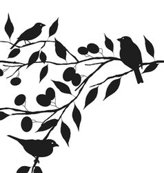 Birds on tree branch vector
