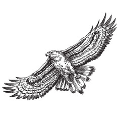 Hand drawn hawk vector