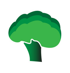 Broccoli icon flat style vector