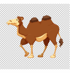 brown camel on transparent background vector image vector image