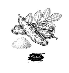 Carob superfood drawing isolated hand vector