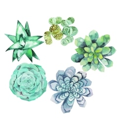 Watercolor succulent collection vector image vector image